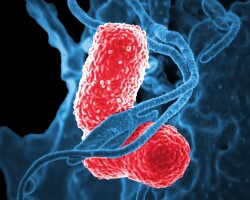 Как правильно сдавать анализ кала на дисбактериоз