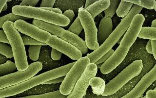 Анализ кала на энтеробиоз: что это такое и как сдавать