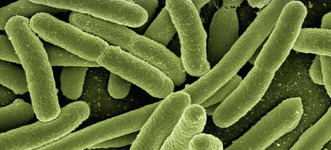 Правила и особенности взятия мазка на энтеробиоз