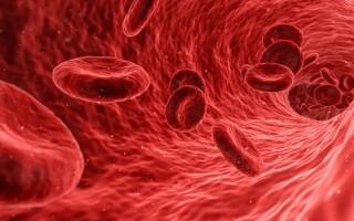 Коагулограмма — анализ на свёртываемость крови